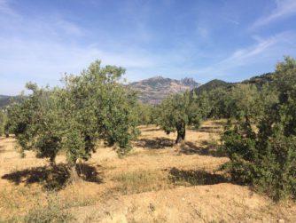 olivera_molí_Olesa_Montserrat_itinerari
